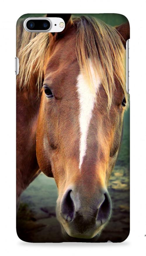 Horse Sighting